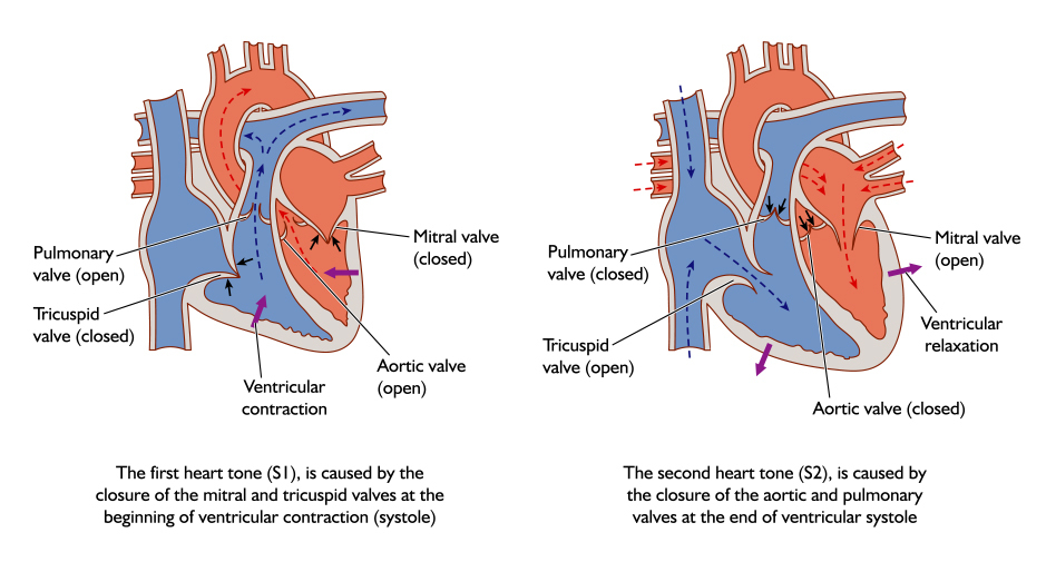Mitral Valve Surgery Identified As Potential Treatment For PAH Secondary to Mitral Valve Disease