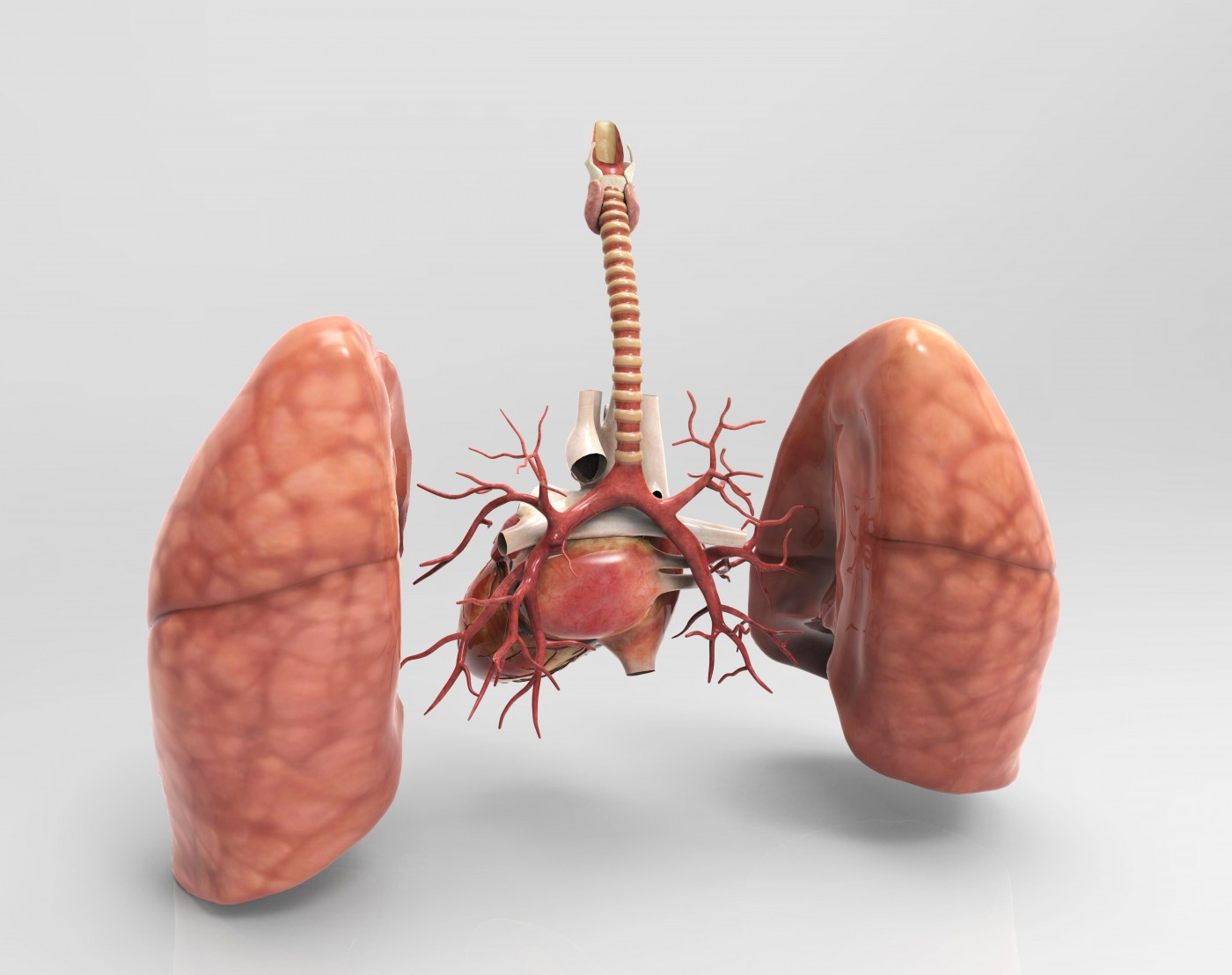 Balloon Angioplasty Aids CTEPH Patients, But in Ways That May Depend on Lung Area Treated