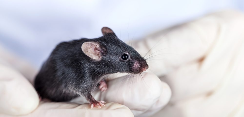 Diethylcarbamazine, an Anti-parasitic Therapy, Prevents PH in Mice, Brazilian Study Finds